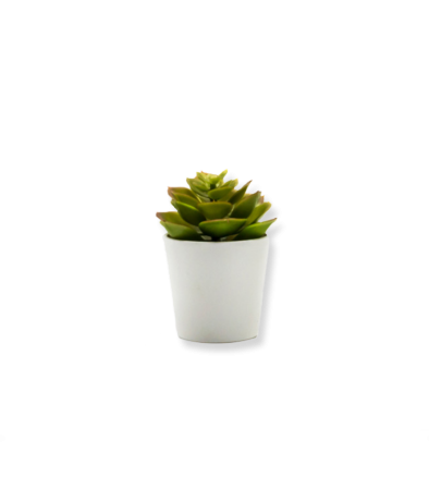 https://www.matiasbuenosdias.com/1461-thickbox_default/mini-planta.jpg
