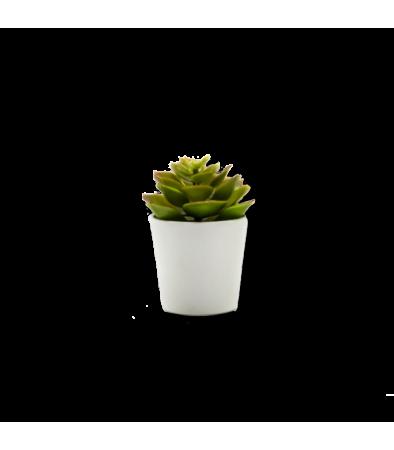 Mini Planta para regalo